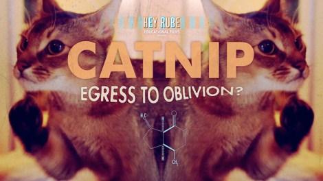 catnip2 (470 x 264)