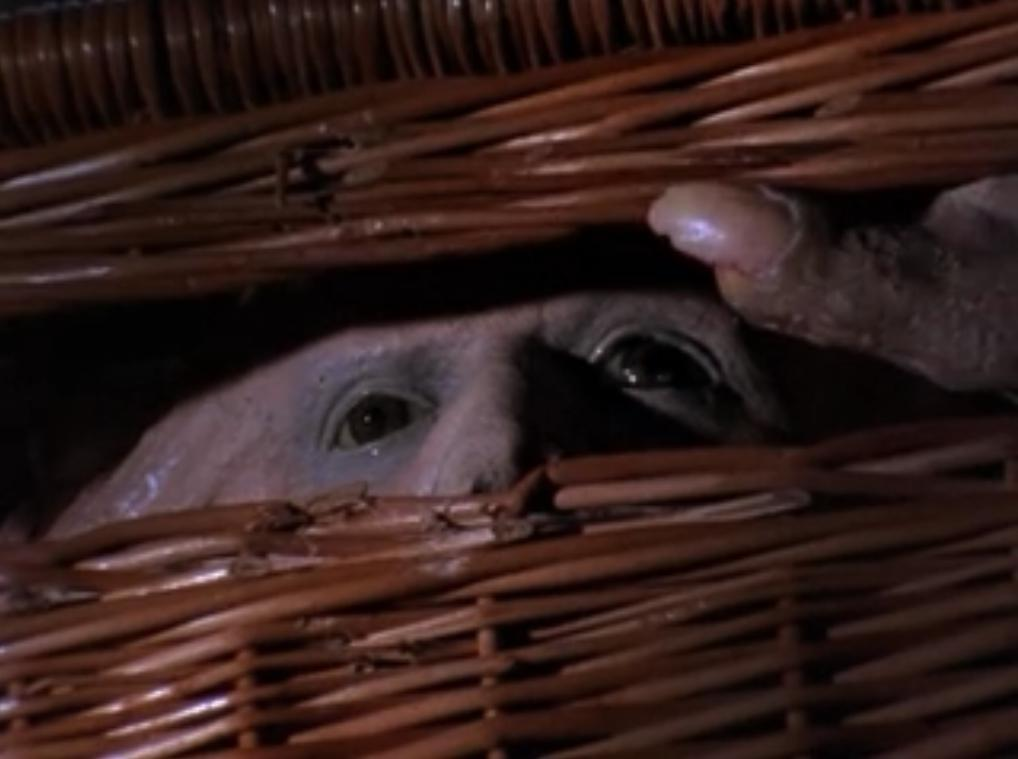 basket case 01