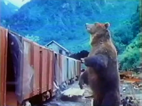 BIG TRAIN BIGGER BEAR