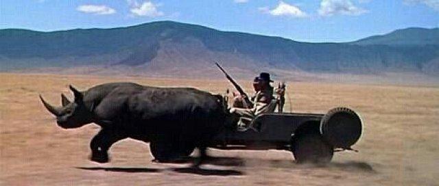 Rhino_Chase