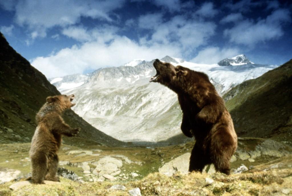 THE BEAR, 1988