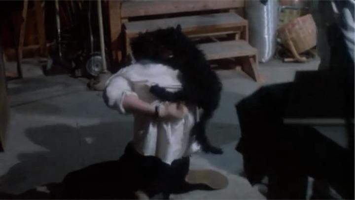 RE-ANIMATOR (1985) cat on head! cat on head!