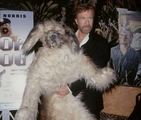 Chuck Norris and what appears to be a Wampa corpse